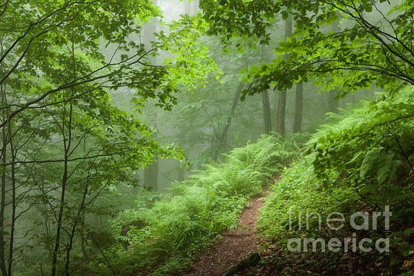 Green Forest Print by Evgeni Dinev