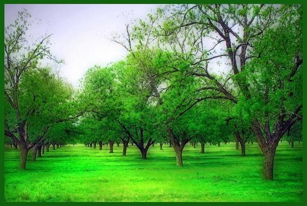 Green Garden By Adeniyi Peter