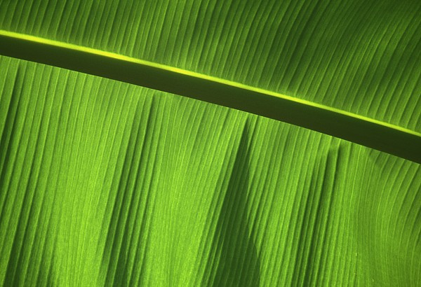 Green Leaf, Close-up Print by Axiom Photographic