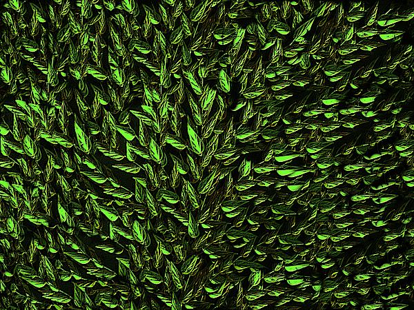 Green Leaf Print by David Dehner
