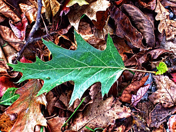 Green Leaf Print by Mark Jordan