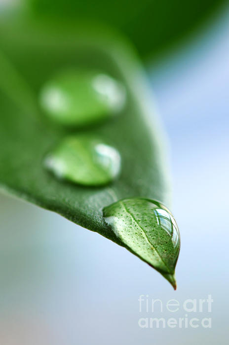 Green Leaf With Water Drops Print by Elena Elisseeva