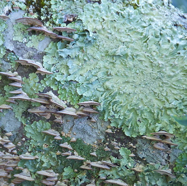 Green Mossy Fungus Party Print by Cindy Lee Longhini