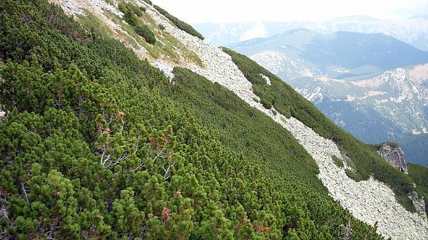 Martin Marinov - Green Mountain Pine