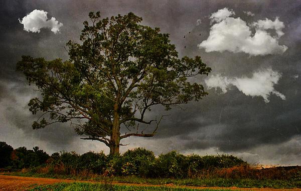 Emily Stauring - Green Tree