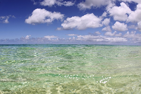 Green Water Seascape Print by Vince Cavataio