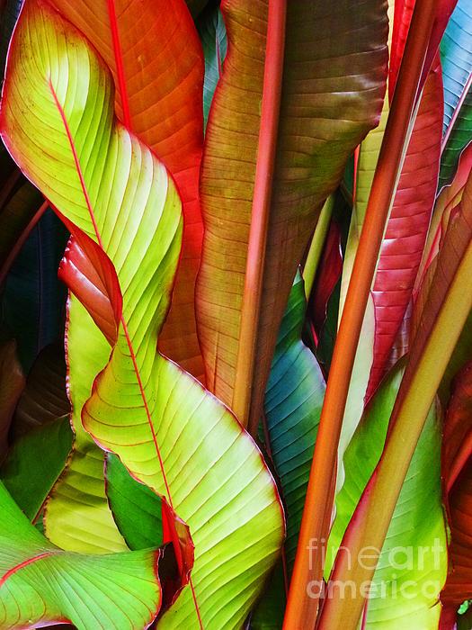 Greenhouse Palms 2 Print by Stephen Mack