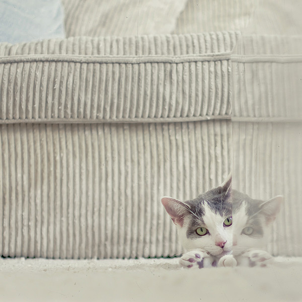 Grey And White Cat Peeking Around Corner by Cindy Prins