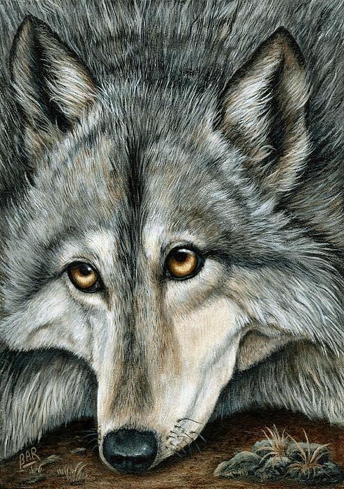 Barbara Ann Robertson - Grey Wolf