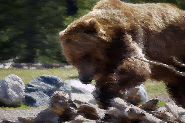 Grizz Dinner Print by Kevin Bone