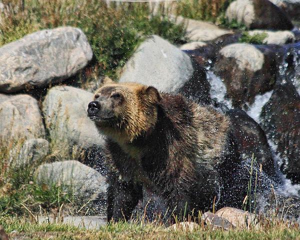 Gene Praag - Grizzly