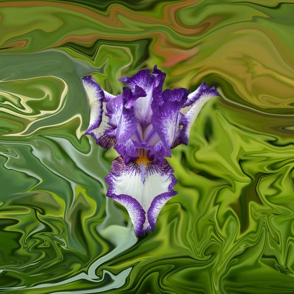 Rebecca Margraf - Groovy Purple Iris