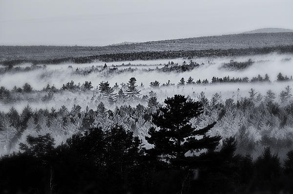 Ground Fog Print by Susan Capuano