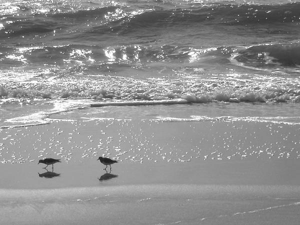 Gulls Taking A Walk Print by Cindy Lee Longhini