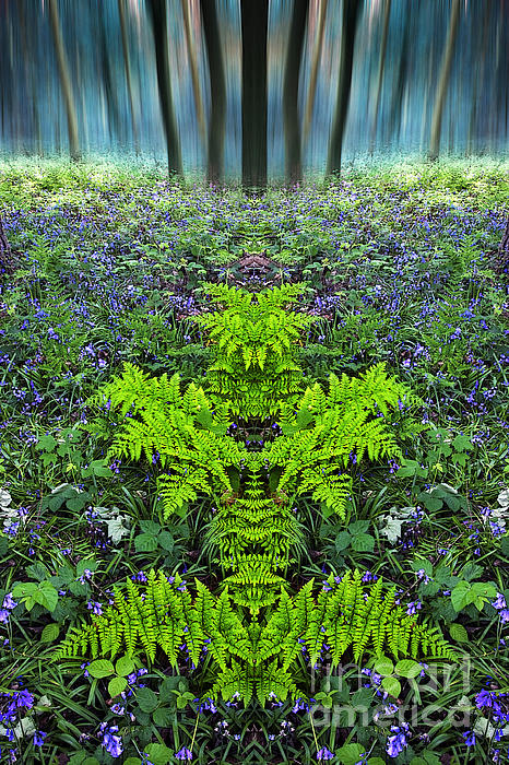 John Potter - Hagg Wood Bluebells and Ferns