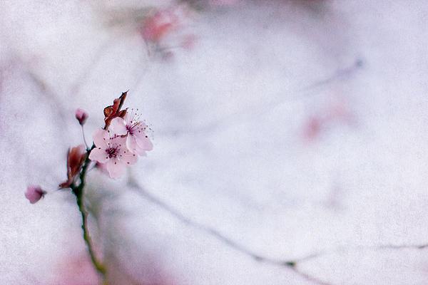 Rebecca Cozart - Haiku Two