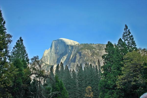 Half Dome Through The Trees 1 Ahwahnee Drive Yosemite National Park Ca Print by Duncan Pearson