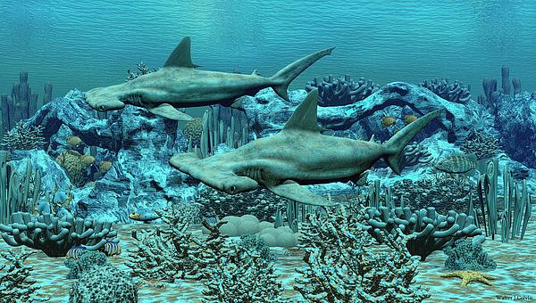 Walter Colvin - Hammer Head Sharks