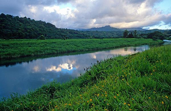 Kathy Yates - Hanalei River Reflections