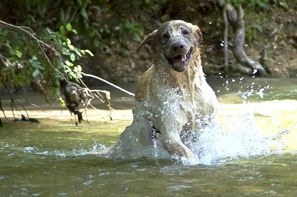 Teresa Dixon - Happy Dog