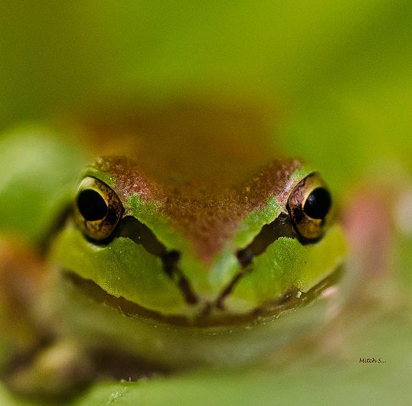 Mitch Shindelbower - Happy Frog