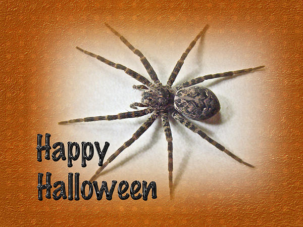 Mother Nature - Happy Halloween Spider Greeting Card - Dolomedes tenebrosus