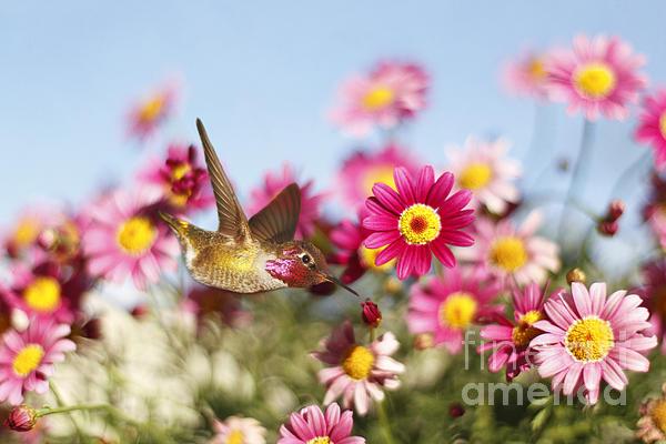 Susan Gary - Happy Hummingbird
