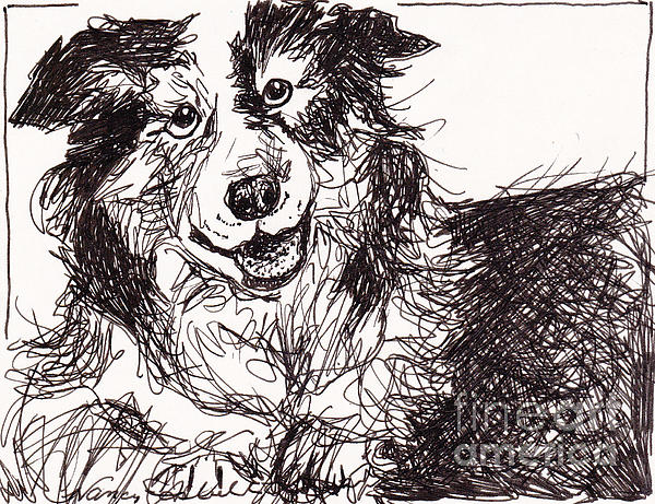 Happy The Boarder Collie Print by Michele Hollister - for Nancy Asbell