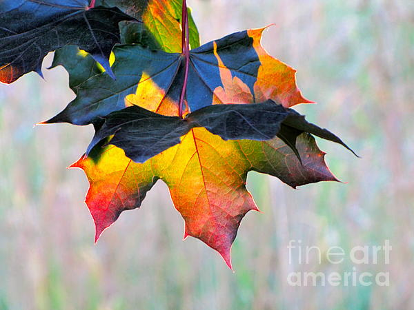 Harbinger of Autumn Photograph