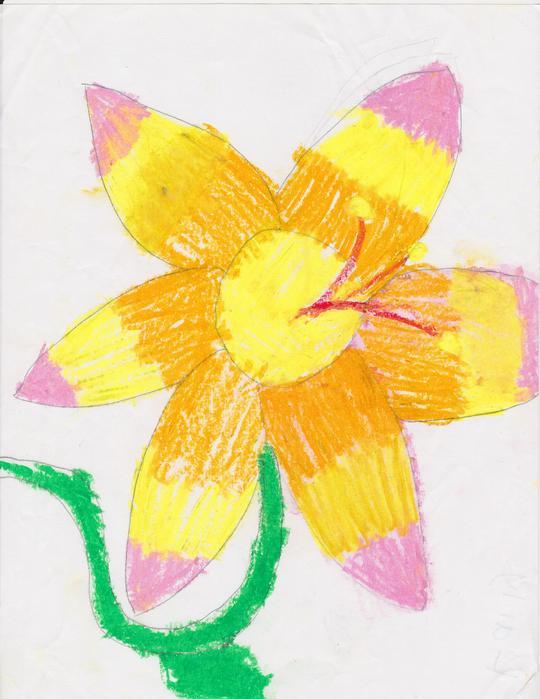 Kaily - Hawaiian Flower