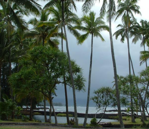 Garnett  Jaeger - Hawaiian Paradise