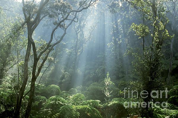 Hawaiian Rainforest Print by Gregory Dimijian MD