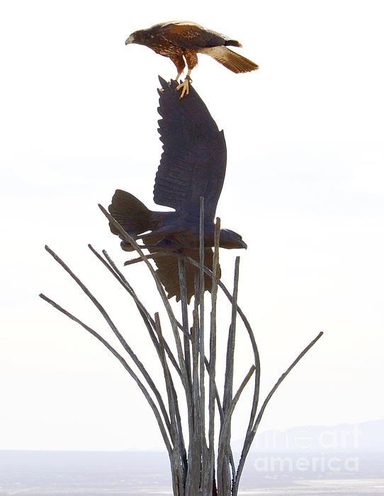 Hawk On Statue Print by Rebecca Margraf