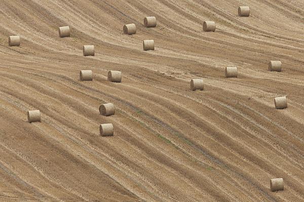 Hay Bales Print by Chris Brocklebank