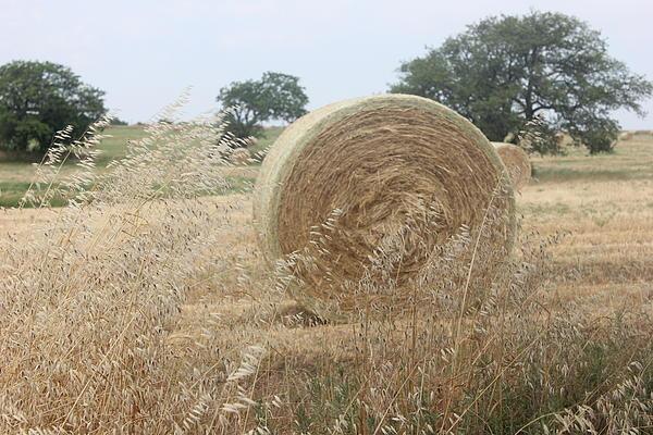 Hay Days In Texas Print by Shawn Hughes