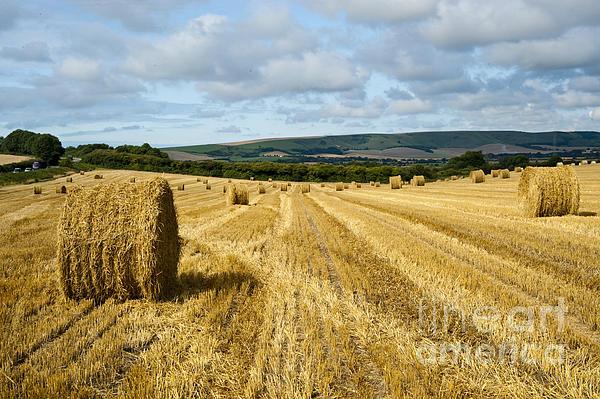 Donald Davis - Hay Field