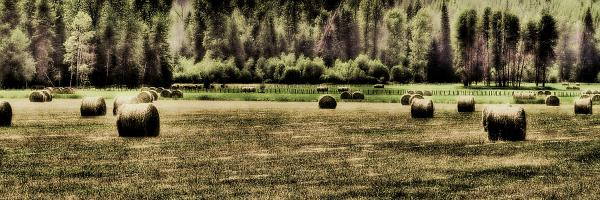 Hay Harvest Print by David Patterson