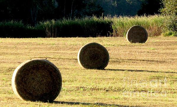 Monika A Leon - Hay Harvest