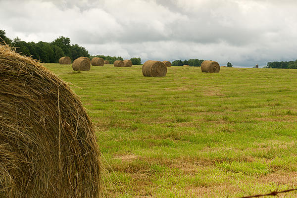 Haybales In Field On Stormy Day Print by Douglas Barnett
