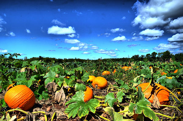 Mike George - HDR pumpkin patch  connecticut