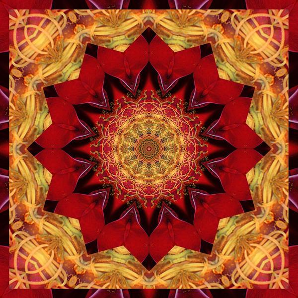 Healing Mandala 28 Print by Bell And Todd