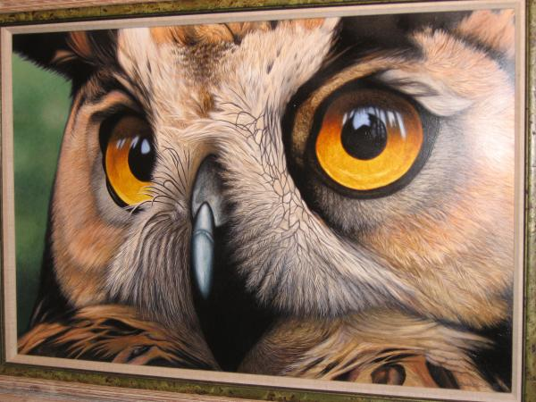 heres-lookin-at-you-owl-daniel-pierce jpgOwl Eyes Paintings