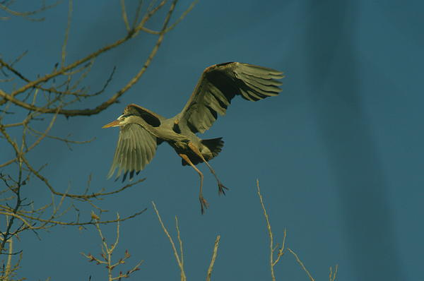 Jeff Swan - Heron Landing