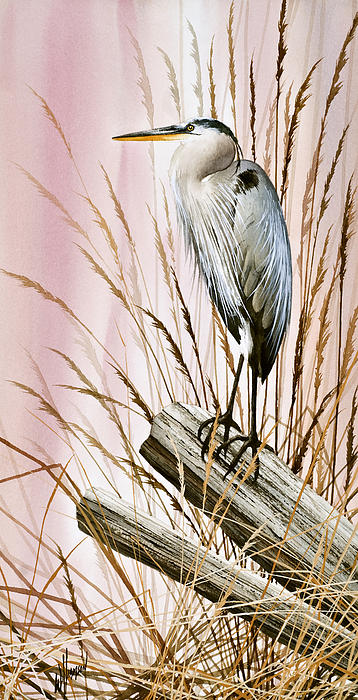Herons Watch Print by James Williamson