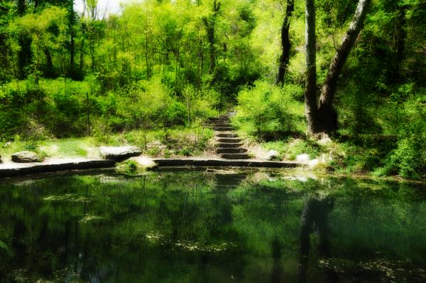 Hidden Pond At Schuylkill Valley Nature Center Print by Bill Cannon