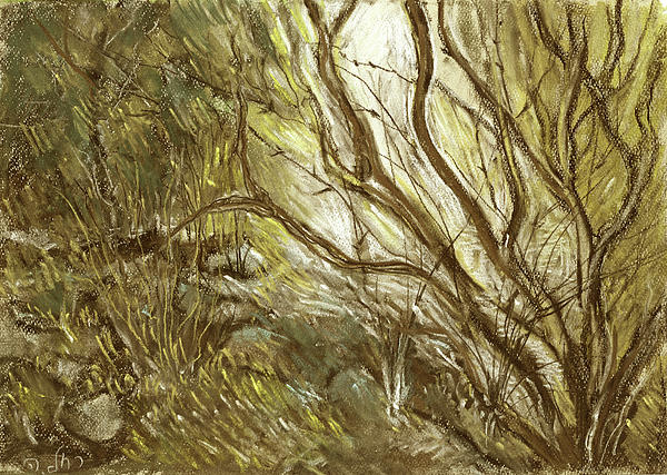 Hideaway Plants In Brown Yellow And Green Branches Leaves Trunks Stones Print by Rachel Hershkovitz