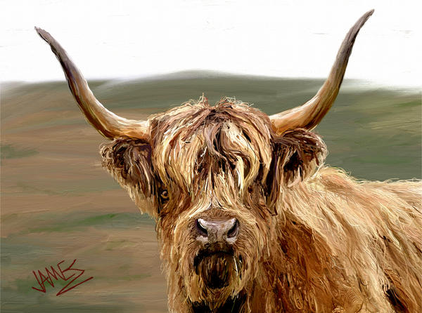 Highland Coo Print by James Shepherd