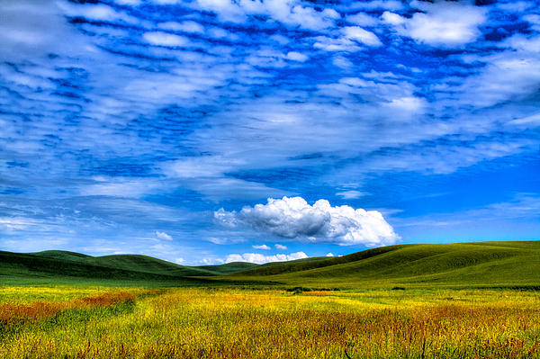 Hills Of Wheat In The Palouse Print by David Patterson