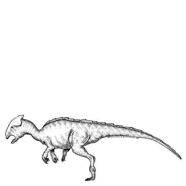 Homalocephale - Dinosaur Print by Karl Addison