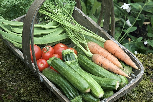 Home-grown Organic Vegetables Print by Sheila Terry